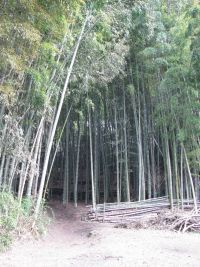 bamboooooo01.JPG