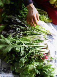 verdureverdure.jpg