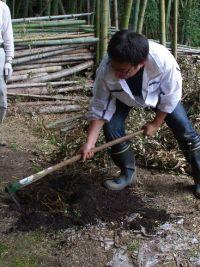 bamboooooo12.JPG