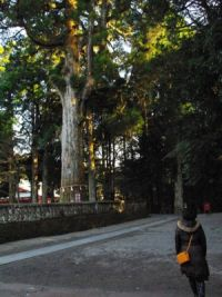 kirishima_tempio_sinto08.jpg