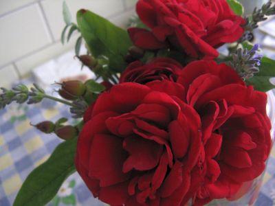 rose_aya.jpg